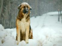 A dog, with a sad expression, sits in a snowy yard as more snow falls.