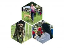 Dogs and dog owners attending the DC Animal Health Fair