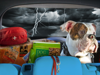 Big dog in the back seat of a car with emergency supplies; the weather is stormy with lightening bolts flashing.