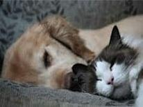 Dog and cat, laying down nice and cozy, taking a nap together.